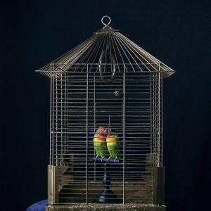 Les Oiseaux - © Solène Ballesta
